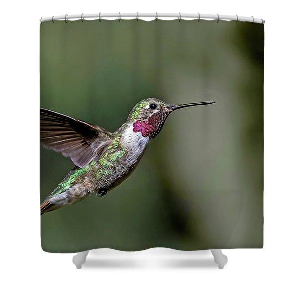 Broad-tailed Hummingbird Male Shower Curtain