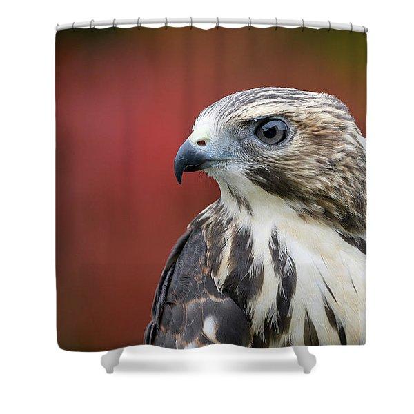 Broad Wing Hawk Shower Curtain