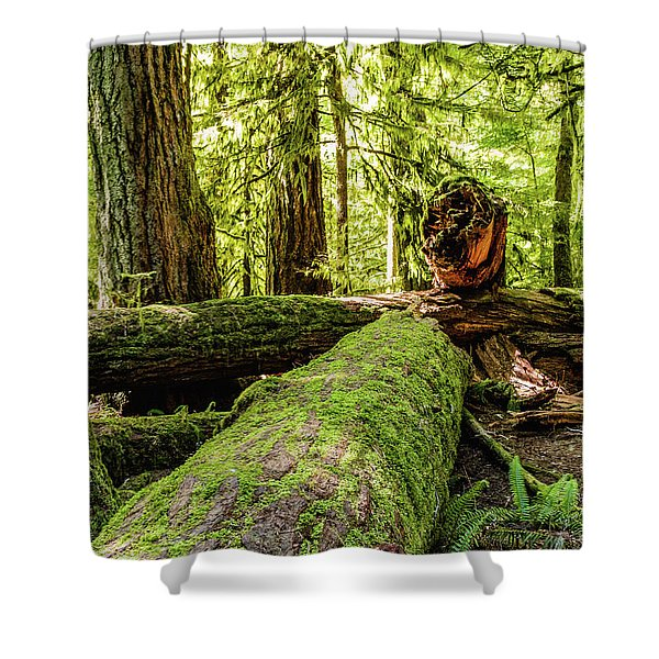 Broken Tree Shower Curtain