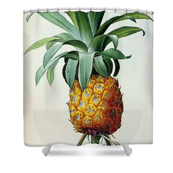 Bromelia Ananas, From 'les Bromeliacees' Shower Curtain