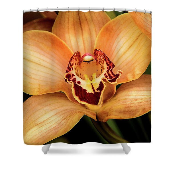 Brookside Orchid Shower Curtain