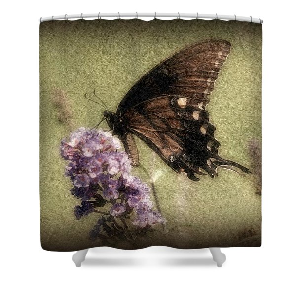 Brown And Beautiful Shower Curtain