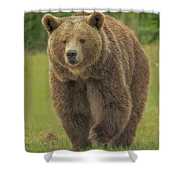 Brown Bear 1 Shower Curtain