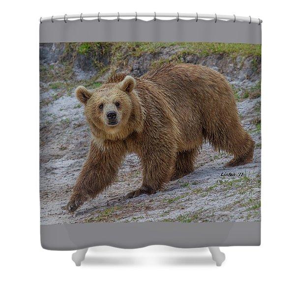 Brown Bear 3 Shower Curtain
