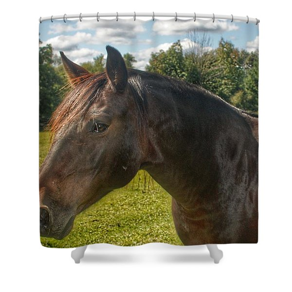 1001 - Brown Beauty I  Shower Curtain