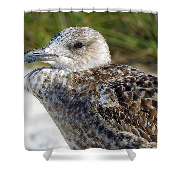 Brown Gull At Wiggins Pass Shower Curtain
