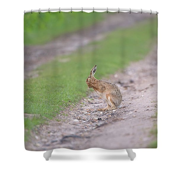 Brown Hare Cleaning Shower Curtain