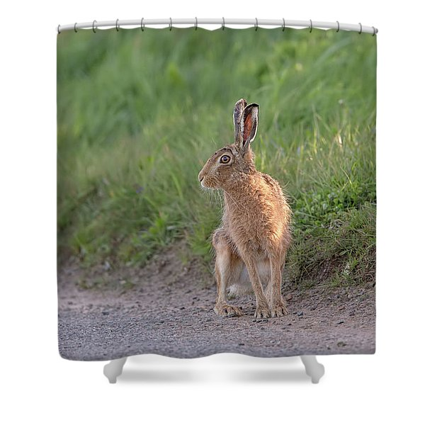 Brown Hare Listening Shower Curtain