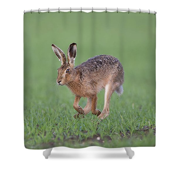 Brown Hare Running Shower Curtain