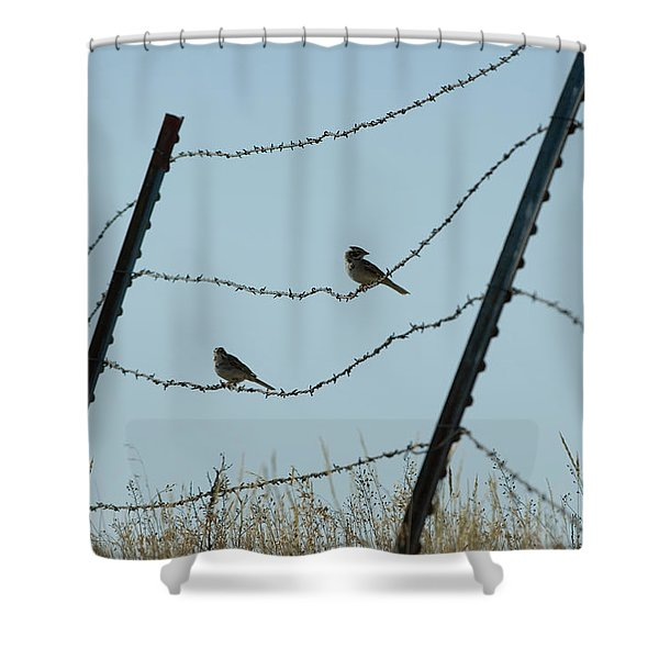Brown-headed Cowbirds Sit On A Wire Shower Curtain