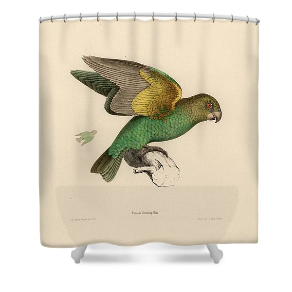 Brown-headed Parrot, Piocephalus Cryptoxanthus Shower Curtain