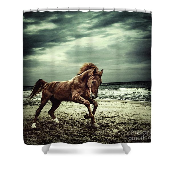 Brown Horse Galloping On The Coastline Shower Curtain