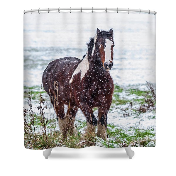 Shower Curtain featuring the photograph Brown Horse Galloping Through The Snow by Scott Lyons