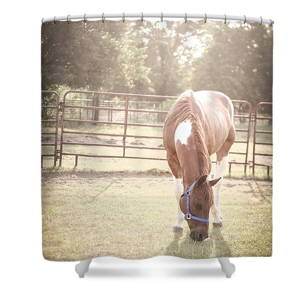 Brown Horse In A Pasture Shower Curtain