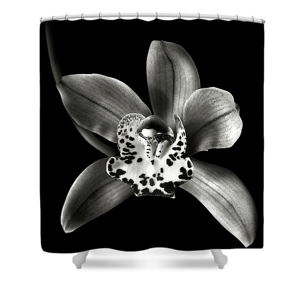 Brown Orchid In Black And White Shower Curtain