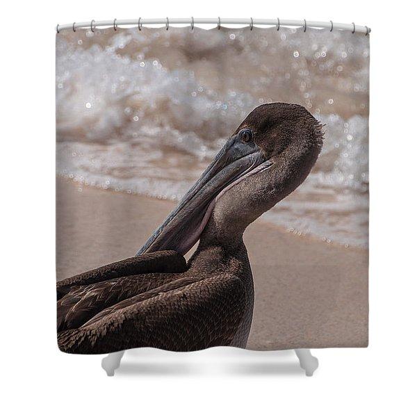 Brown Pelican On Las Bachas Beach Santa Cruz Indefatigable Island  Galapagos Islands Shower Curtain