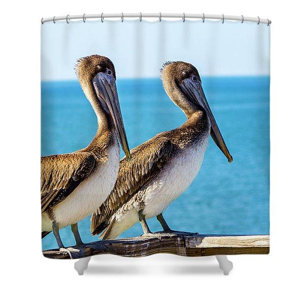 Brown Pelican Pair Shower Curtain