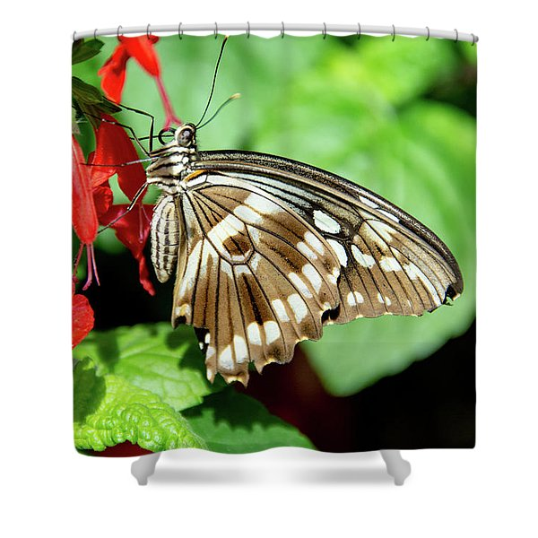 Brown Swallowtail Butterfly Shower Curtain