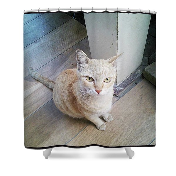 Shower Curtain featuring the photograph Brunch Companion. I Couldn't Resist by Mr Photojimsf