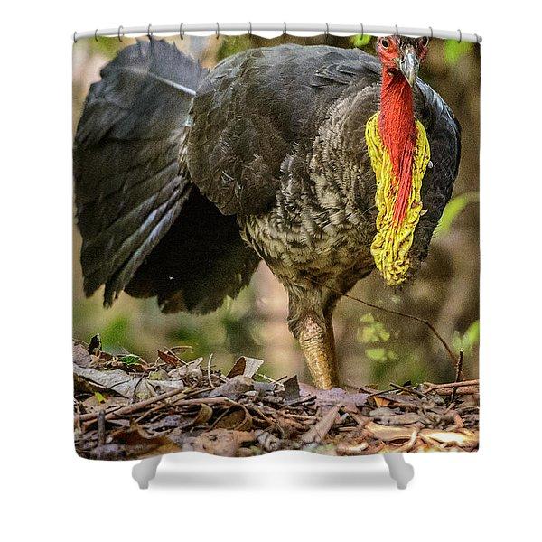 Brush Turkey Shower Curtain