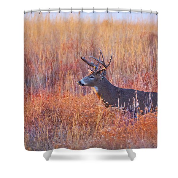 Shower Curtain featuring the photograph Buck Deer In Morning Sunlight by John De Bord