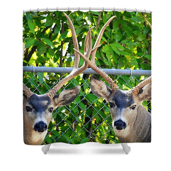 Buck Eyes Shower Curtain