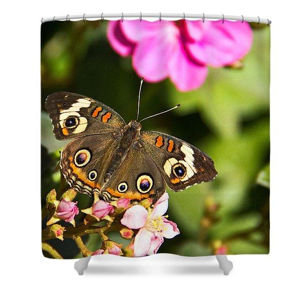 Buckeye Butterfly Shower Curtain