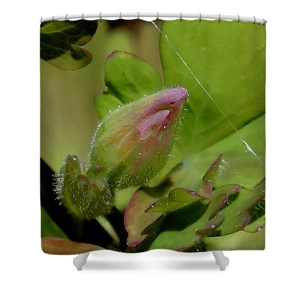 Bud And Spider Silk Shower Curtain
