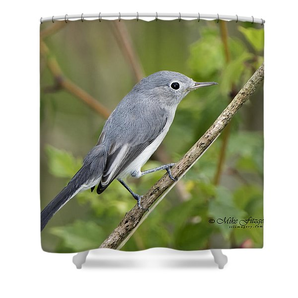 Bue And The Gray Shower Curtain