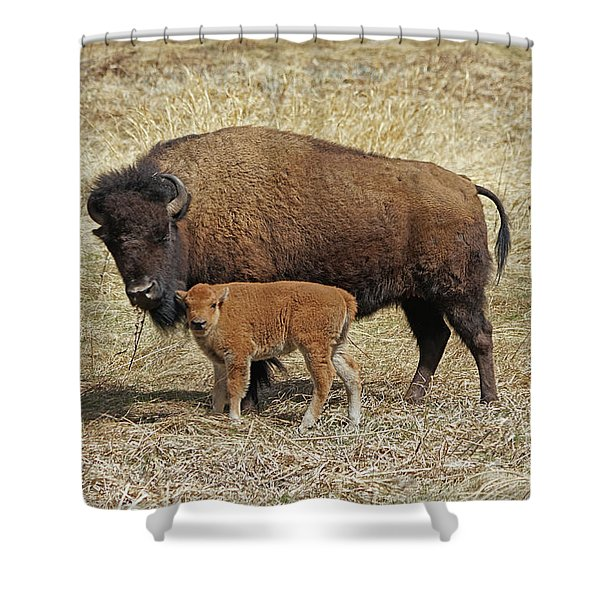 Buffalo With Newborn Calf Shower Curtain