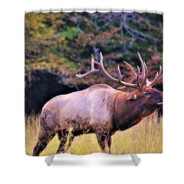 Bull Calling His Herd Shower Curtain