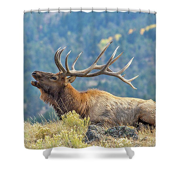 Bull Elk Bugling Shower Curtain