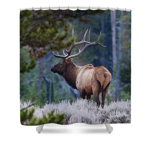 Bull Elk In Forest Shower Curtain