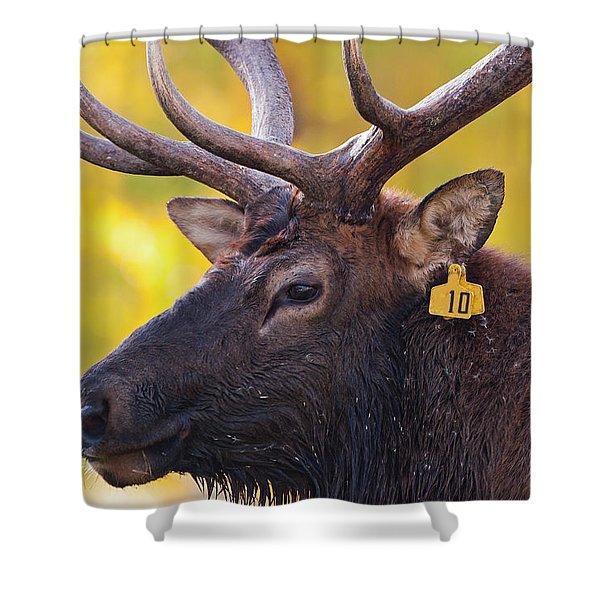Bull Elk Number 10 Shower Curtain
