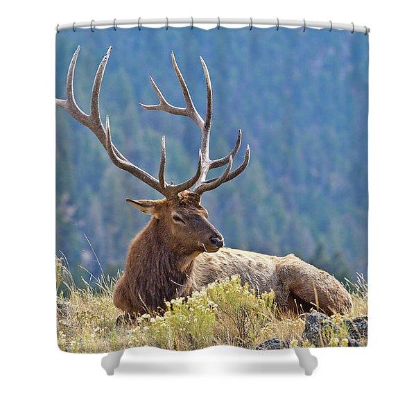 Bull Elk Resting Shower Curtain