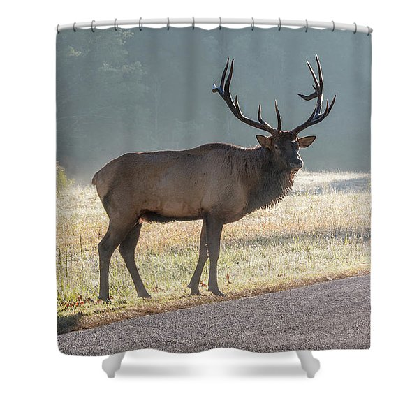 Shower Curtain featuring the photograph Bull Elk Watching by D K Wall
