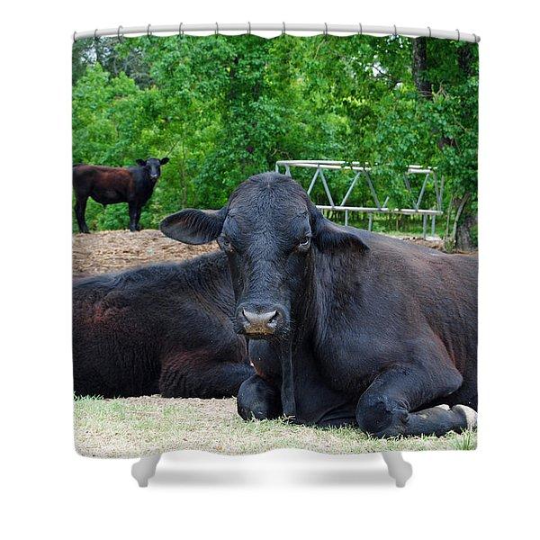 Bull Relaxing Shower Curtain