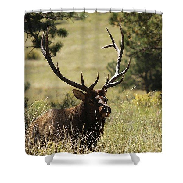Bullelk1 Shower Curtain