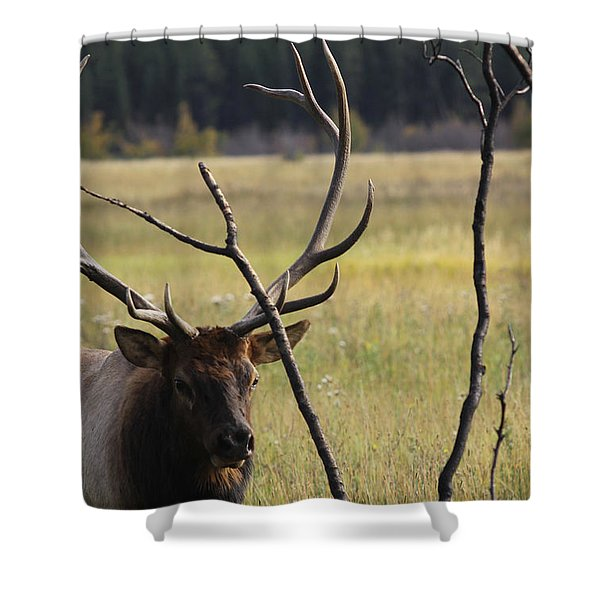 Bullelk2 Shower Curtain