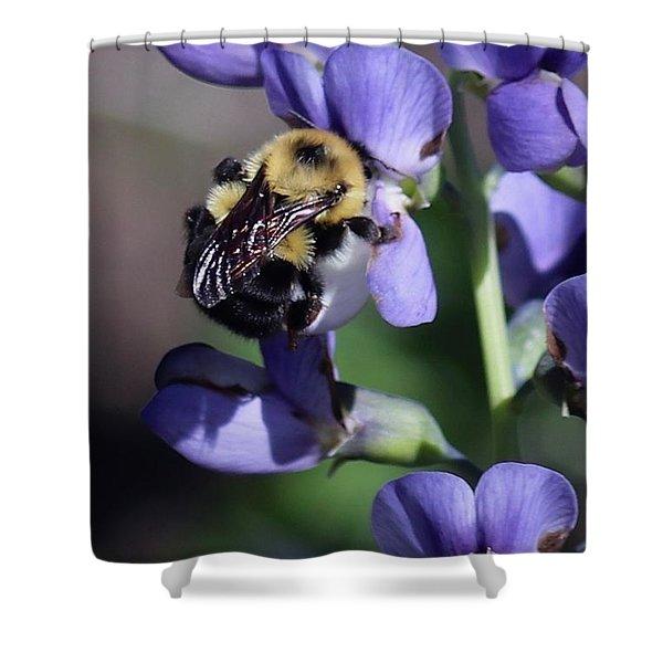 Bumble Bee, Blue Indigo Shower Curtain