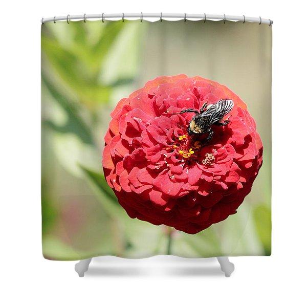 Bumble Bee On Zinnia Shower Curtain