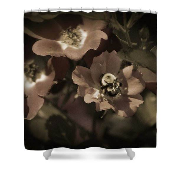 Bumblebee On Blush Country Rose In Sepia Tones Shower Curtain