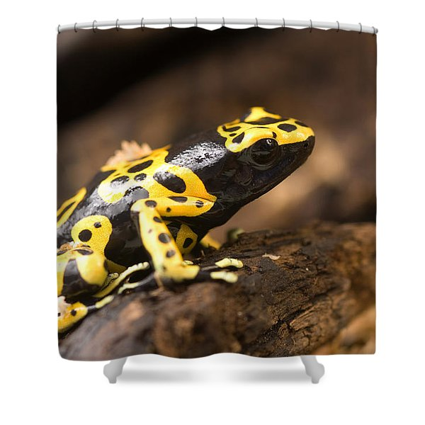 Bumblebee Or Yellow-backed Poison Dart Shower Curtain