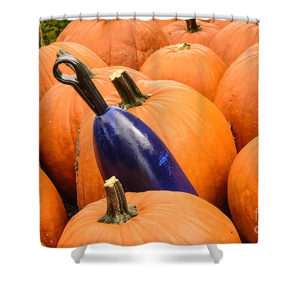 Buoy And Pumpkins Shower Curtain