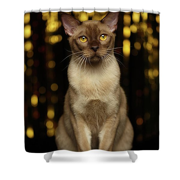 Burmese Cat Sits On New Year Background Shower Curtain