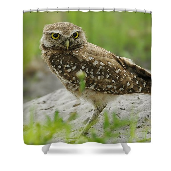 Burrowing Owl By Burrow Mound Shower Curtain