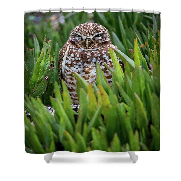 Burrowing Owl Shower Curtain
