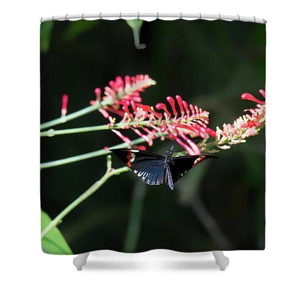 Butterfly In Flight Shower Curtain