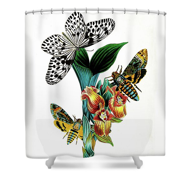 Butterflies, Moths And Orchids, Vintage Botanical Painting Shower Curtain