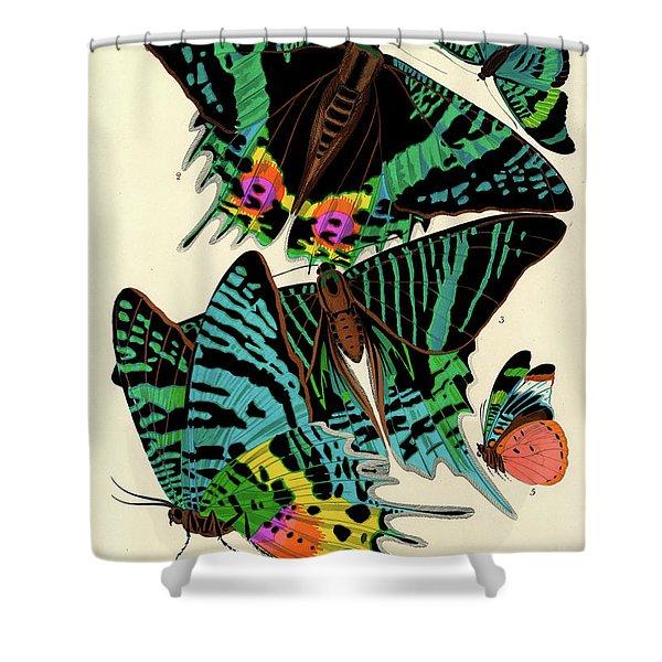 Butterflies, Plate-7 Shower Curtain